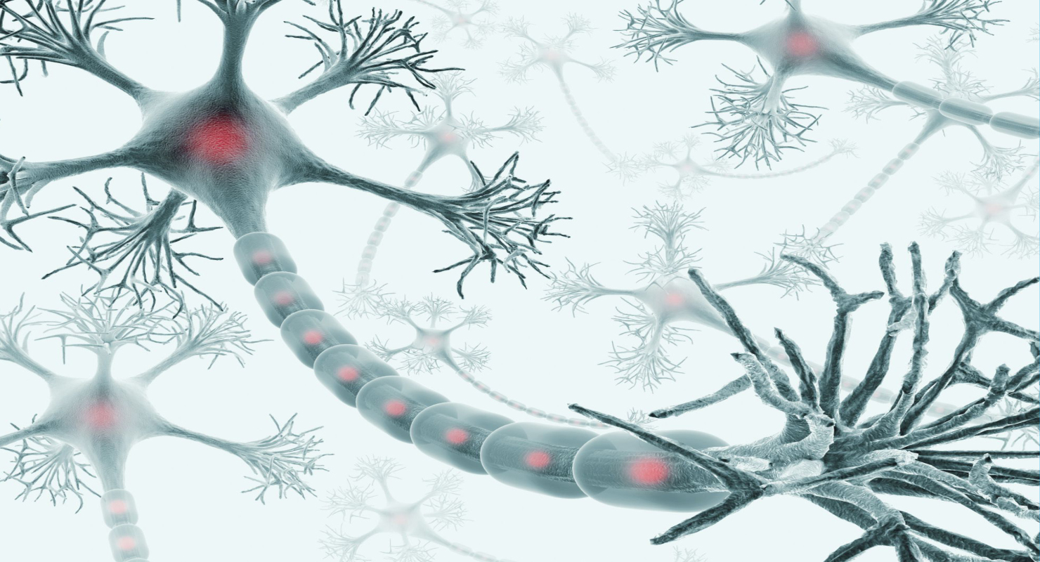 Sistem Saraf dan Neuron