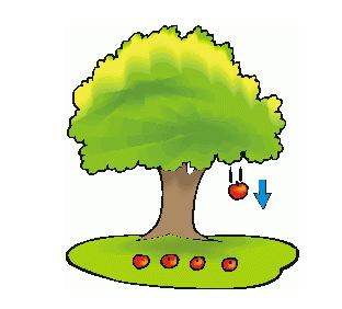 Contoh Efek Gaya Gravitasi dari Pohon apel di Materi SD Kelas IV